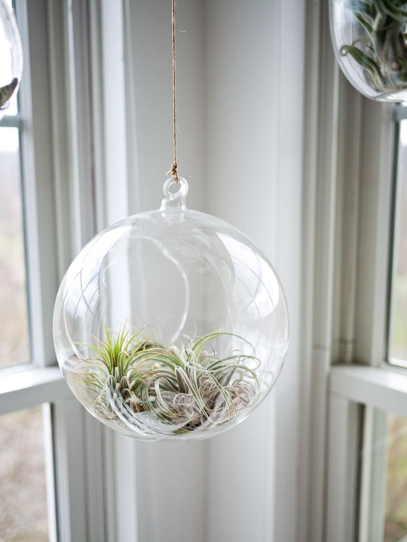 Hängen statt stellen: So klappt's auch mit dem Platz in der Küche. Außerdem werden die dort ausgestellten Pflanzen zum Hingucker. (Foto: Jeff Sheldon)