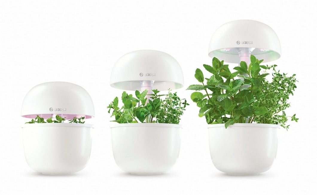 Das Bosch SmartGrow-Gerät wächst mit den Küchenkräutern und Pflanzen mit. Die Wachstumsphasen staffeln sich je nach Sorte in verschiedene Wochen. (Foto: Bosch Hausgeräte)