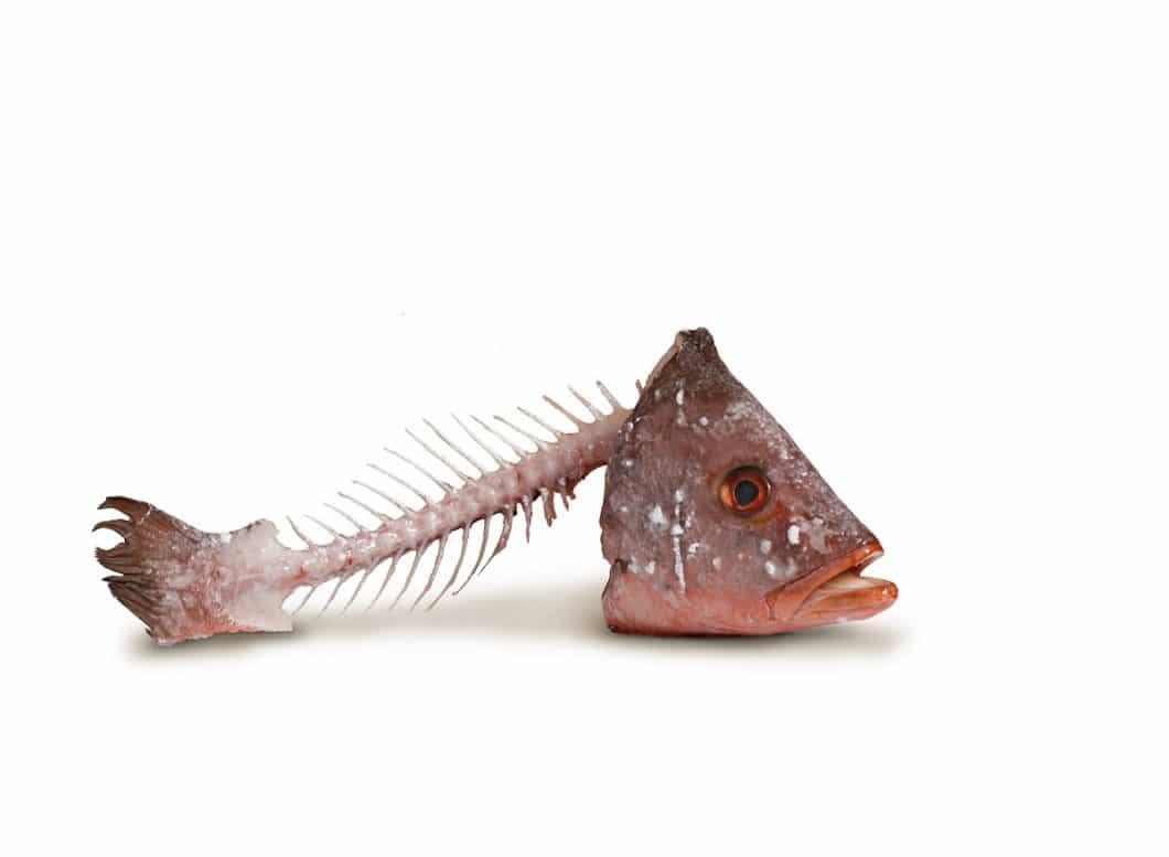 Fisch-, Fleisch- und Obstabfälle fangen in herkömmlichen Komposteimern schnell an, unangenehm zu riechen. Der FreezyBoy® soll dem Abhilfe schaffen mit Minustemperaturen bis zu -5°C. (Foto: AVANTYARD LTD.)